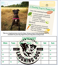 Inside of the calendar, featuring a KONG recipe and a winning dog's photo of him outside enoying golden fields